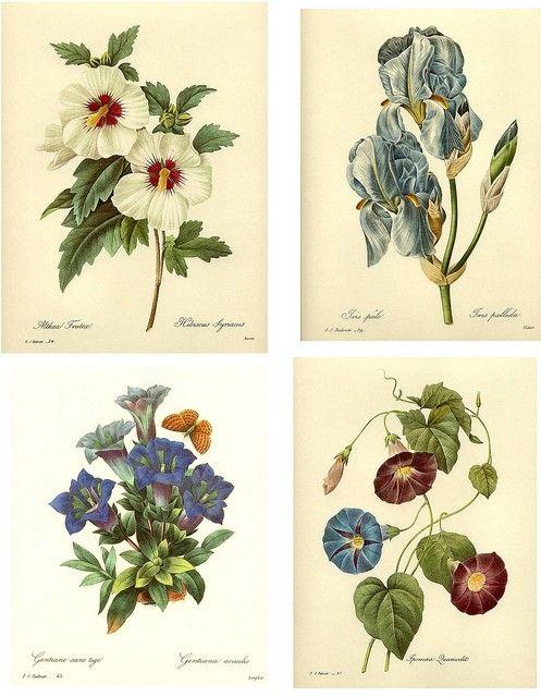 21 best seasonal images on pinterest antique prints for Botanical tattoo london