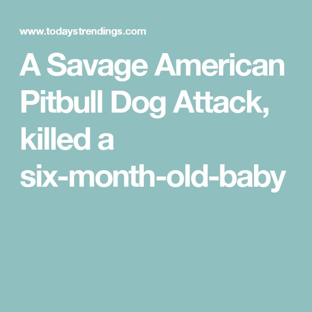 A Savage American Pitbull Dog Attack, killed a six-month-old-baby