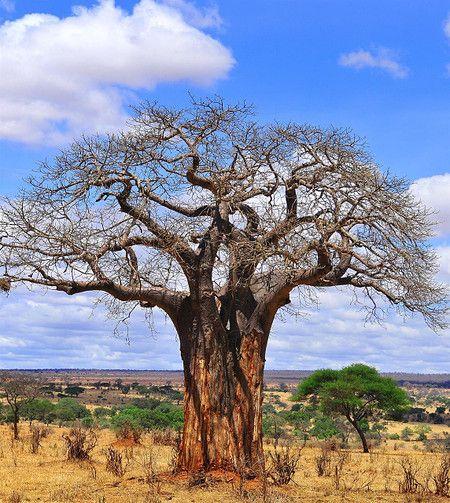 262 besten Bäume & Sträucher Bilder auf Pinterest