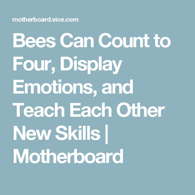 Bees Can Count to Four, Display Emotions, and Teach Each Other New Skills | Motherboard