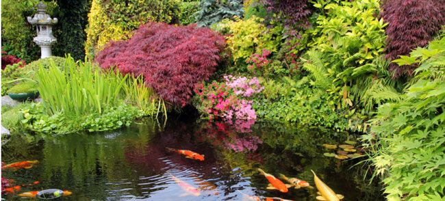39 best images about diy ponds water features on for Best pond plants for goldfish
