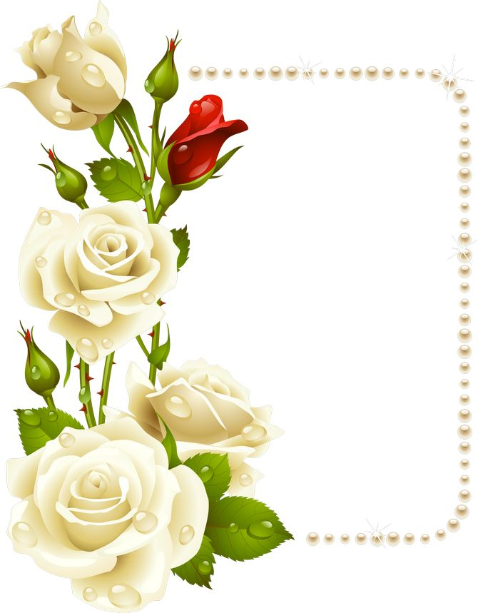 rosas blancas png