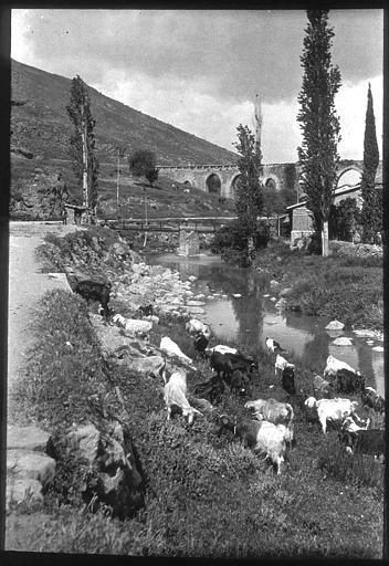 Izmir; Chèvres sur la rive d'un fleuve, aqueduc en arrière-plan PhotographeRoy, Lucien (architecte) Date prise vue 1908