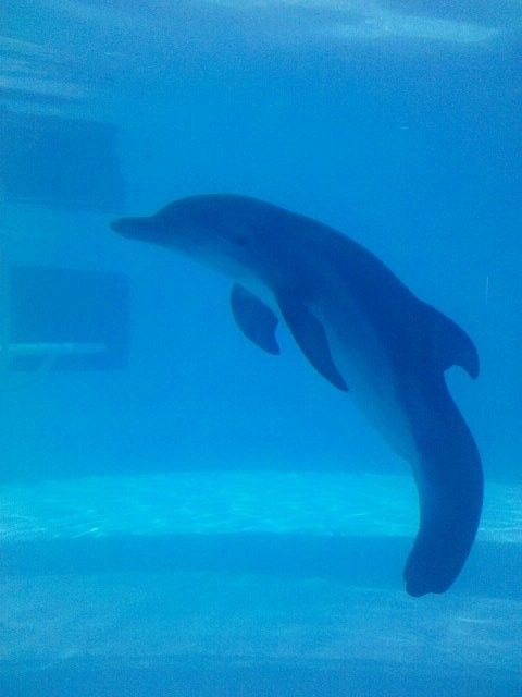winter the dolphin | winter dolphin tale Live report from the set of 'Dolphin Tale': Part 2