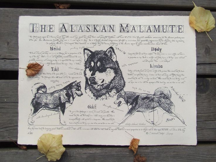 Antique styled dog standard - Alaskan Malamute by Creativedoglover on Etsy