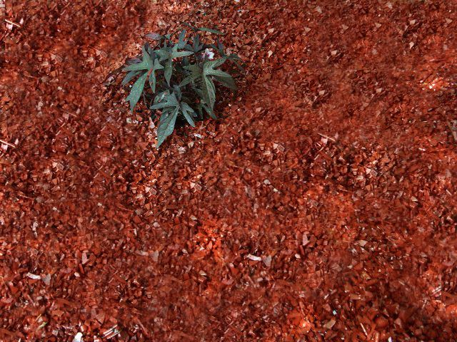 1000 Images About Recycled Rubber Mulch On Pinterest