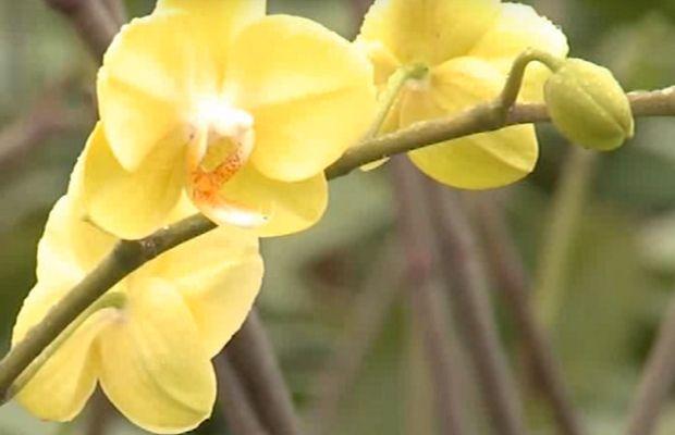 Arrosage d'une orchidée phalaenopsis : la vraie méthode dévoilée
