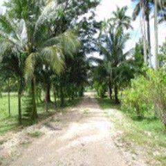 Scotland Halfmoon Village, Belize, Belize Farm/Ranch  For Sale - Belize Farm Land with Livestock - IREL is the World Wide Leader in Belize Real Estate
