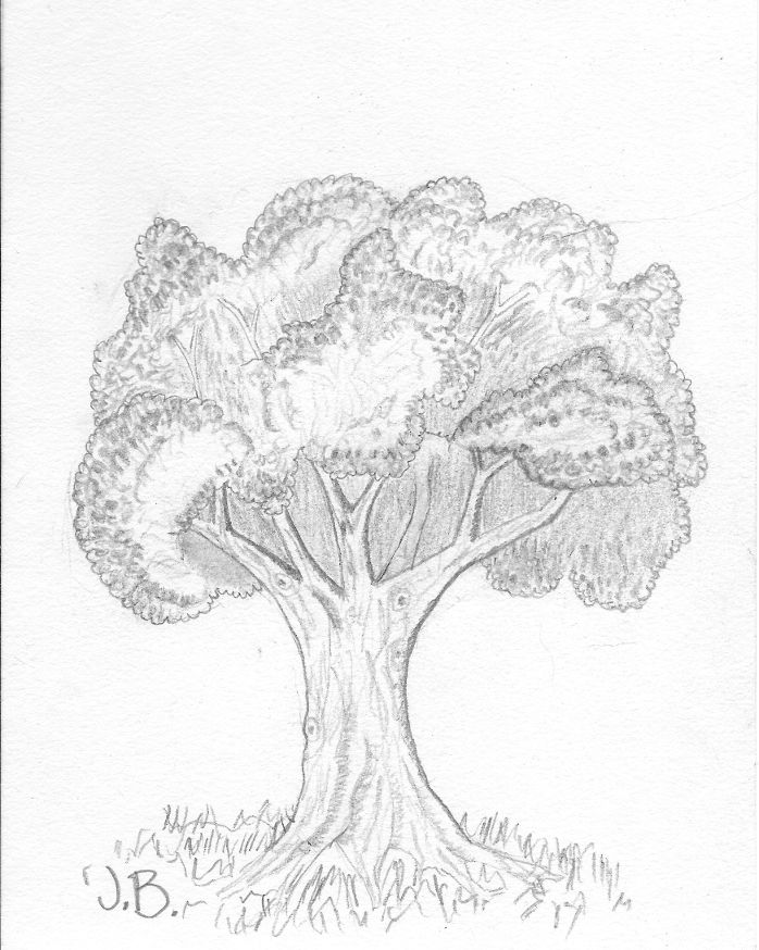 An oak with some leaves and shading