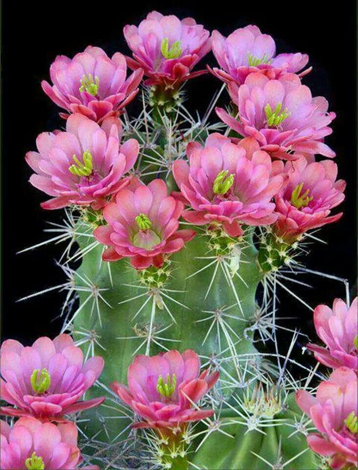 beautiful cactus with flowers
