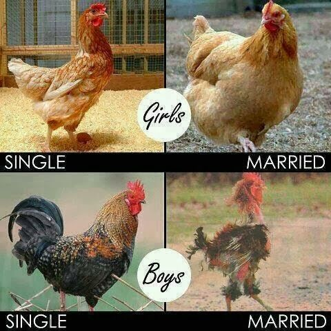 THE DIFFERENCE BETWEEN SINGLE AND MARRIED
