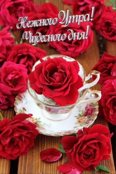 красные розы поздравления с добрым утром словам