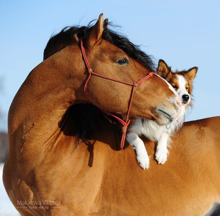 cariño entre animales