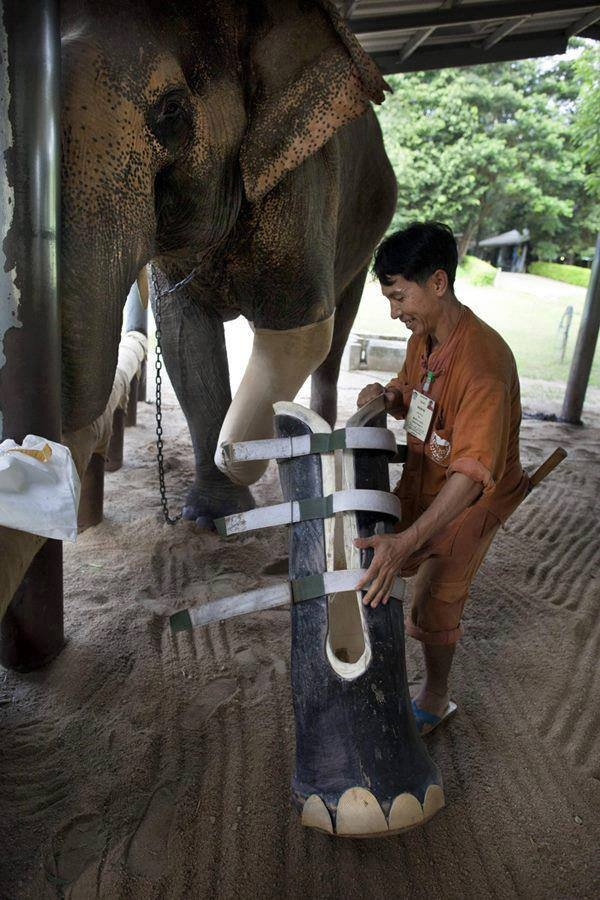 Motala, age 50, lost his foot after stepping on a land mine. Thanks to the dedicated workers at the world's only elephant hospital located in Lampang, Thailand, he received a new prosthetic leg.