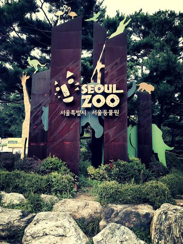Take in the wildlife at The Seoul Zoo Made in the West Indies: Seoul's Grand Park Station