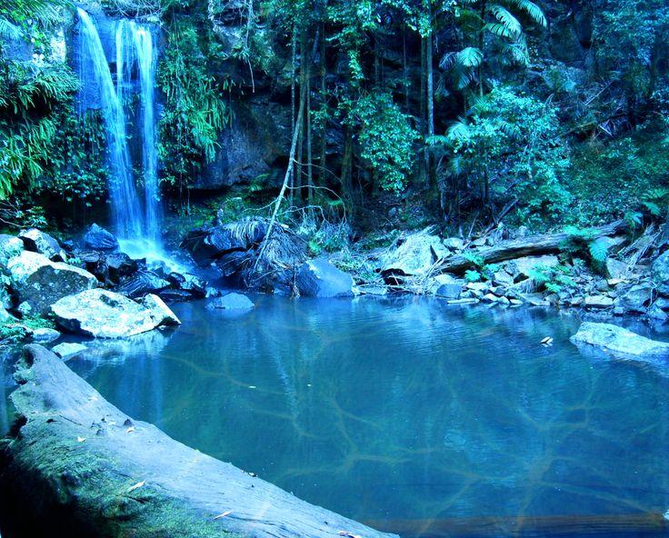 Rainforest, Tamborine Mountain, Gold Coast