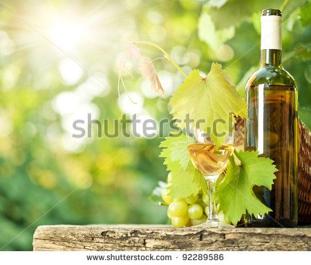White wine bottle, glass, young vine and bunch of grapes against green spring…
