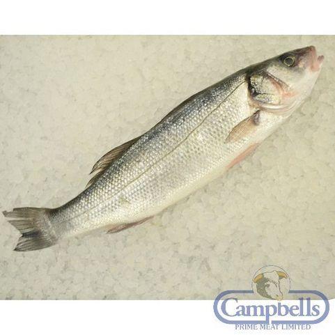 13 best images about scottish fish on pinterest martin for Fish 2 flirt
