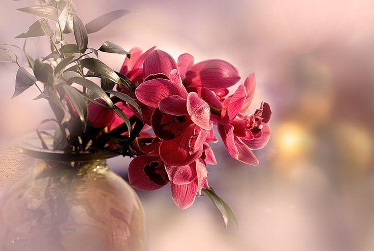 Легенды об орхидеях. Обсуждение на LiveInternet - Российский Сервис Онлайн-Дневников