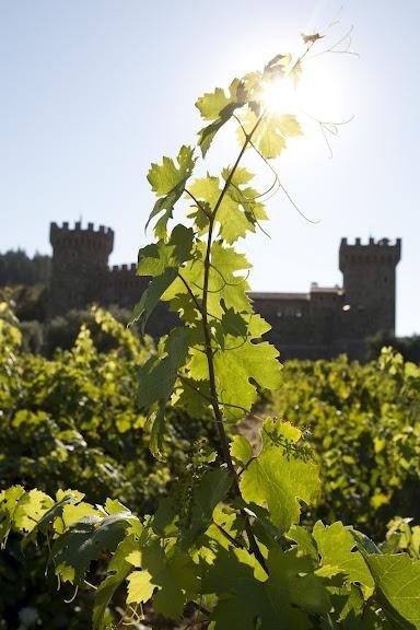 Napa Valley Vineyard and Winery Castle near Aurora Park in Calistoga, CA