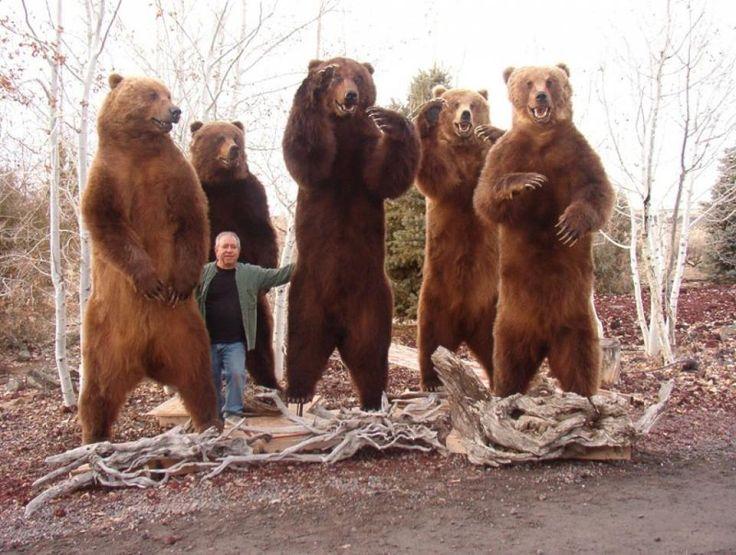 308 best Bear Hunting images on Pinterest | Bären, Grizzlybären und ...