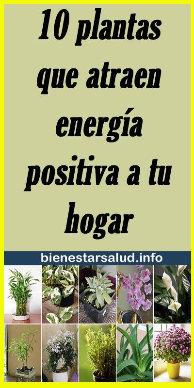 10 plantas que atraen energía positiva a tu hogar