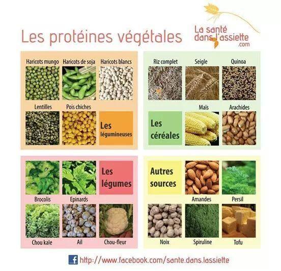 Quelques sources de protéines végétales