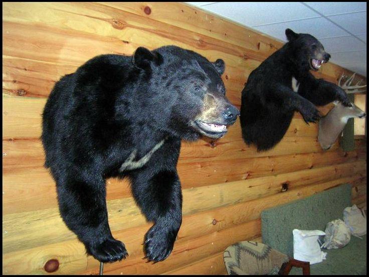 Show Me Your Black Bear Mounts Hunting Pinterest