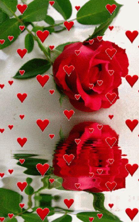 Смешные, гифы сердца и розы