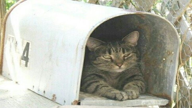 Cats Waits For The Mailman | Package carriers are warned about dogs but no one ever tells them about THE CATS!