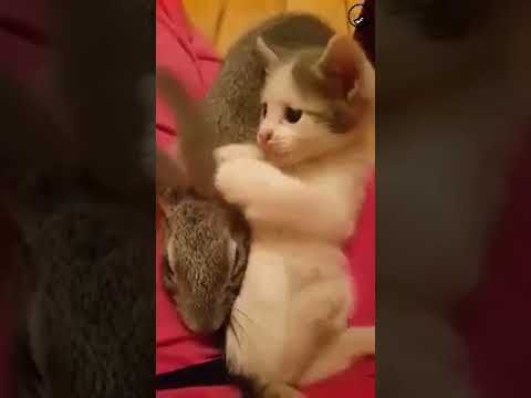 Cats and Rabbits are Best Friends