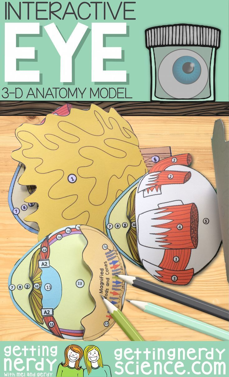 Try A Paper Dissection Model Before The Real Thing Or In Lieu Of Using Real Cow Or Sheep Eyes Complet Biology Classroom Science Projects Human Body Activities [ 1211 x 735 Pixel ]