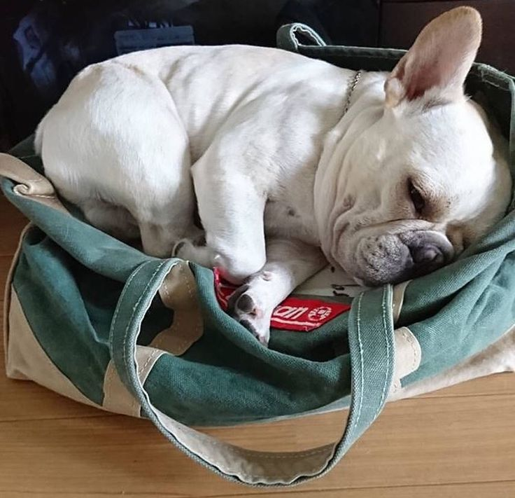 Don't care if you need this bag. I am a tired Cutie pie.