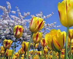 Resultado de imagen para imagenes flores amarillas