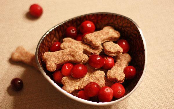 dolcetti autunnali per cani con mele e mirtilli