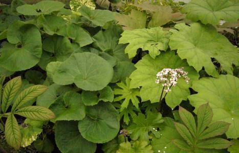 Plantes d ombre que planter l 39 ombre what to plant for Plante persistante