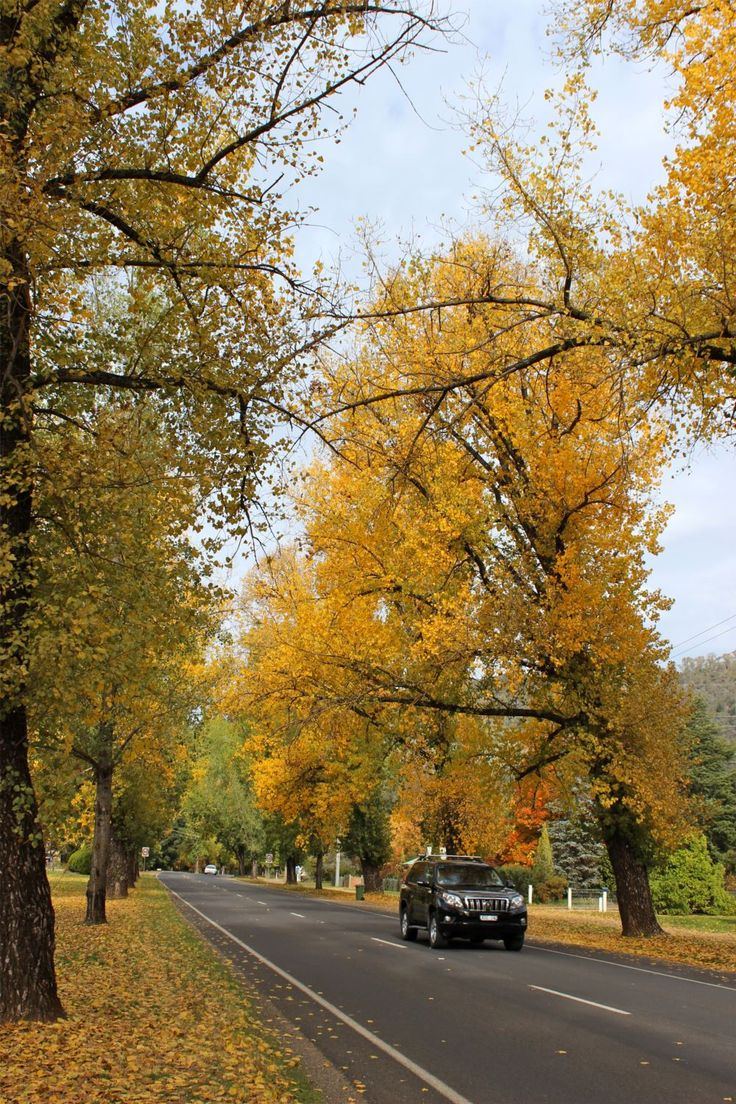 Bright Victoria : Streets lined with Autumn gold : Alpine Valley Getaways