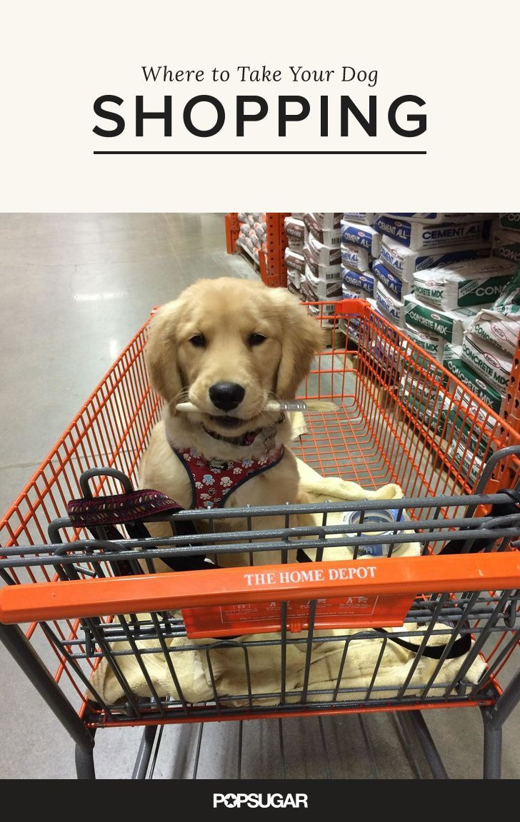 13 Stores That Will Welcome Your Dog With Open Arms While You Shop