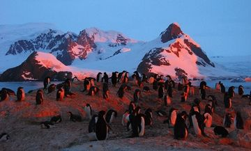 Swoop Antarctica | Fly-and-Cruise | Crossing the Antarctic Circle.  #Wildlife #Antarctic #Antarctica #Penguins