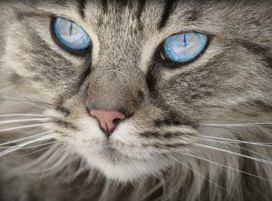 Cats - Top 70 Cats