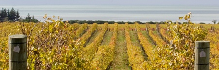 Wine Tours - Winery Tours Niagara - Ultimate Wine Tour & Beautiful Niagara-on-the-Lake