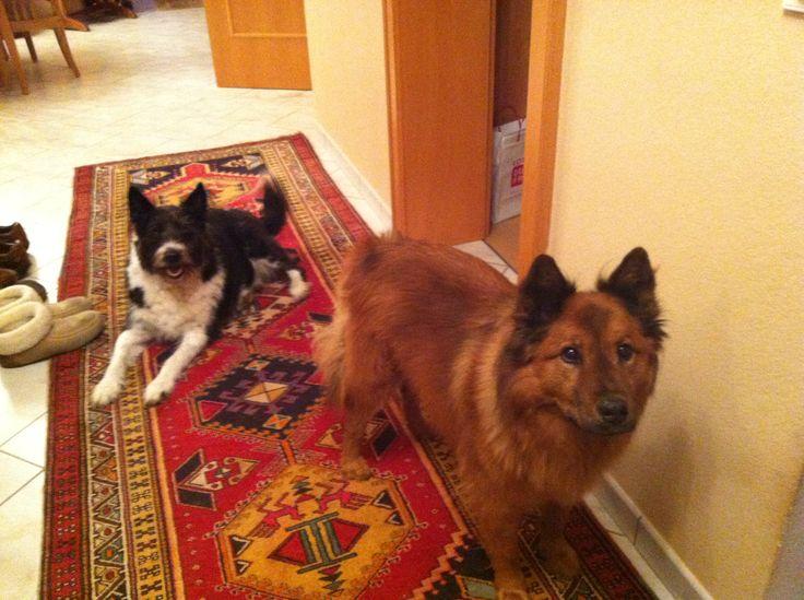 Sparky Under Chester Mischling Hunde