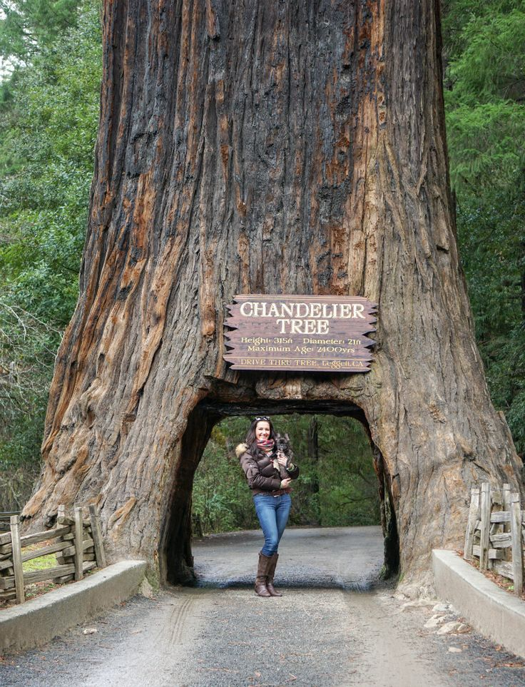 beautiful wedding places in northern california%0A An Inspiring Northern California Road Trip Adventure