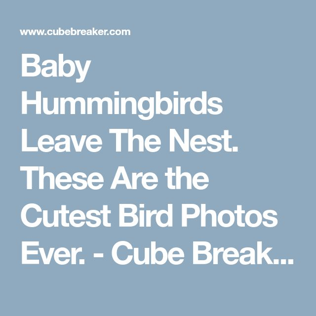 Baby Hummingbirds Leave The Nest. These Are the Cutest Bird Photos Ever. - Cube Breaker