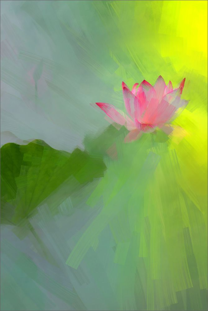 Lotus Flower Paintings - Image Based - Akvis Oil Paint Filter - akvis.com/en/oilpaint/index.php