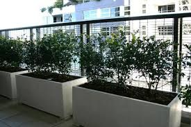murraya potted 2 per trough to create a sense of enclosure for space