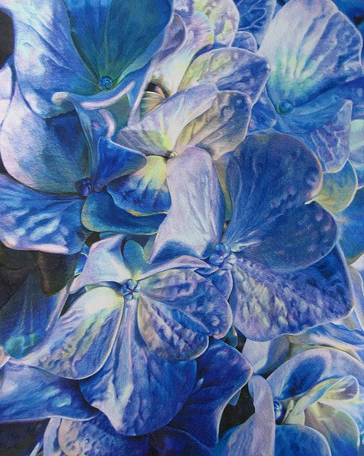 Moms Flowers - COLORED PENCIL | This is a colored pencil drawing of Hydrangeas that I did for my mom, it is aprox. 20X28.