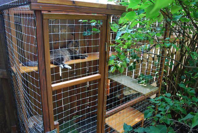 Cats Enjoying Outdoor Cat Enclosures Outdoors Pinterest