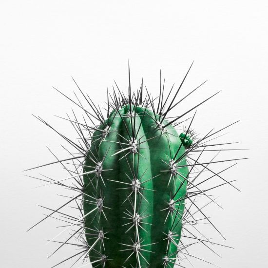 Decorate your walls with this cool CACTUS Art Print from $18 #cactusart…