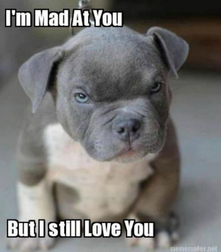101 Funny I Love You Memes To Share With People You Like Funny Animal Memes Funny Animal Jokes Funny Animals